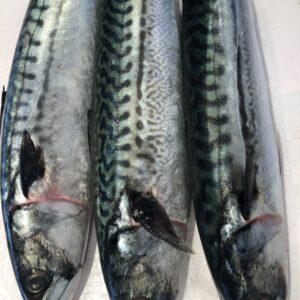 verse makreel